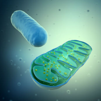 Does Mitochondrial Dysfunction Finally Connect the Diverse Medical Symptoms We Now See in Children With Various Health Problems?